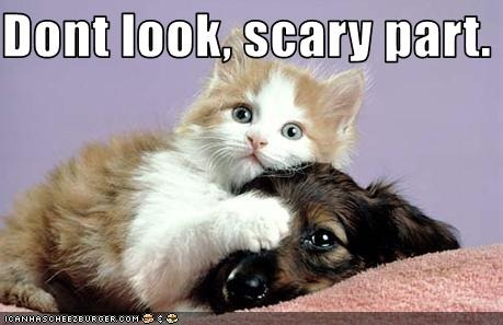 !! funny-pictures-kitten-and-puppy-watch-a-scary-movie-together