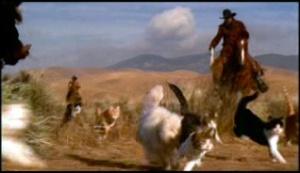 !! herding cats !!